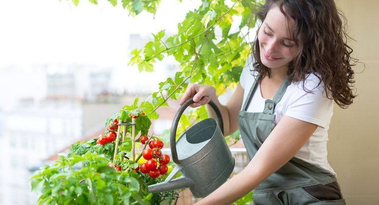 Frau gießt eine Tomatenpflanze auf dem Balkon mg_guene_oase.jpg