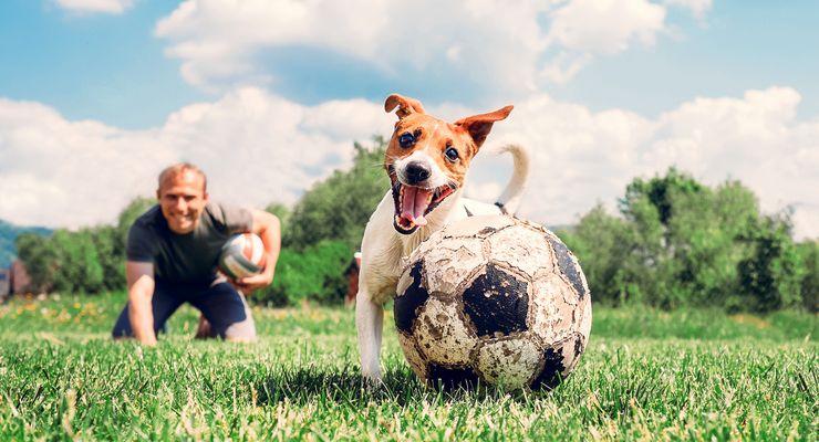 Hund und Herrchen spielen ball auf einer Wiese mg_hundesport.jpg